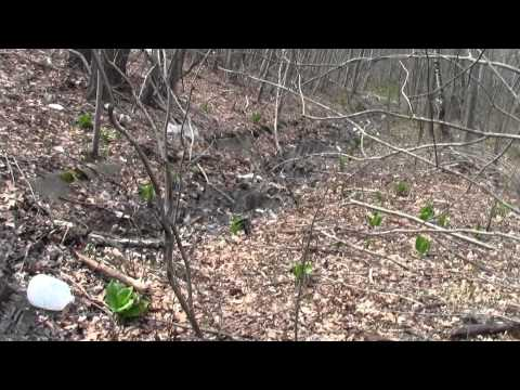Neponset River Greenway Canton MA Fowl Meadow Part 11.