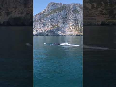 Avistan tres ballenas junto a Gibraltar