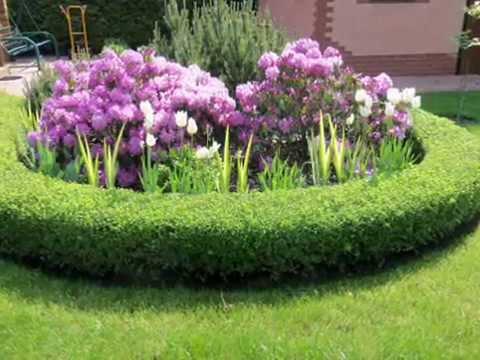 Как украсить участок. Оргигинальные декоративные кустарники и растения в ландшафтном дизайне