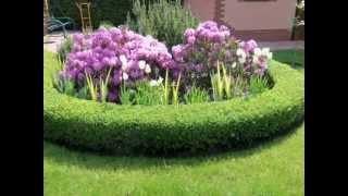 Как украсить участок. Оргигинальные декоративные кустарники и растения в ландшафтном дизайне thumbnail