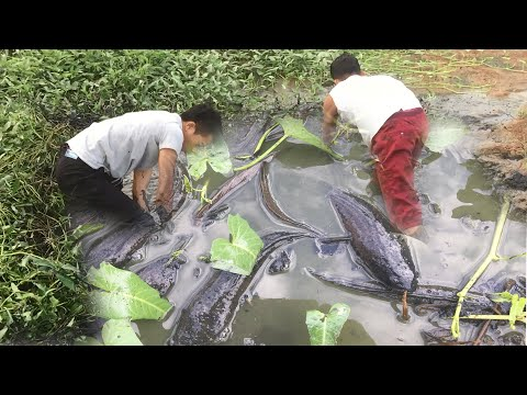 Best Catching Fish Video! Two Man Fishing Fish Dry Season