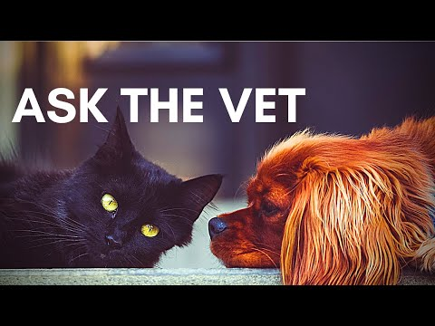 Ask a Vet with Dr  Tracy Eure, DVM