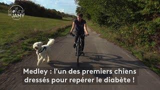 Le meilleur du monde de Jamy – Medley, l'un des premiers chiens dressés pour repérer le diabète !