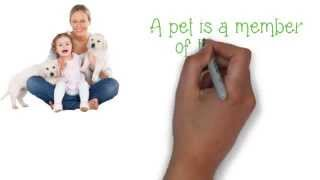 Carpet Pet Urine Stains Remover Tips In Calgary