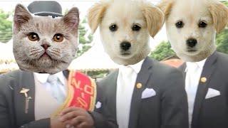 Cat vs Dog Coffin Dance Meme Part 2