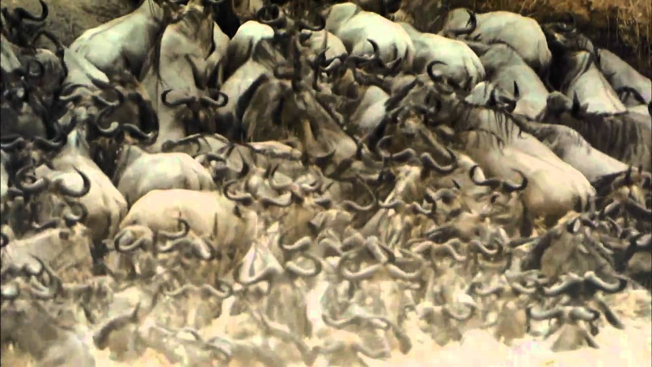 Seen on IMAX: Africa - The Serengeti [ HD Trailer ]