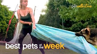 This Dog Hates Yoga | Best Pets of the Week