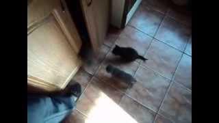 Очень интересный ролик про котят и их мамку Кошку по кличке Мыша