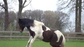 Our happy horses and Flip doing some WEIRD jumps haha! =)