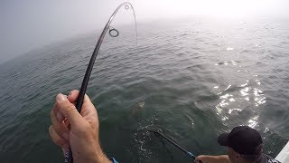 This Cow Could Pull! Light Tackle Bucktailing Stripers. Testing a $40 Reel.
