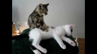 Котенок Лечебный массаж/Kitten Massage Therapy
