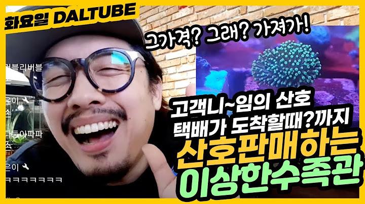 화요밤 라이브 !(고객님  산호 택배 받을때까지 기다린다 !!!!)