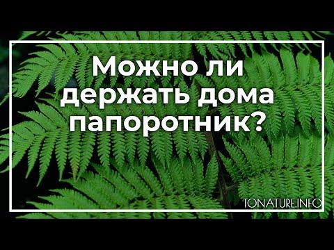 Можно ли держать дома папоротник? | toNature.Info
