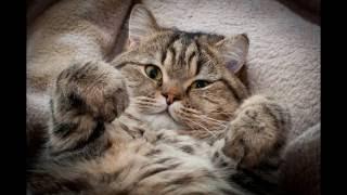 Слайд-шоу кошек
