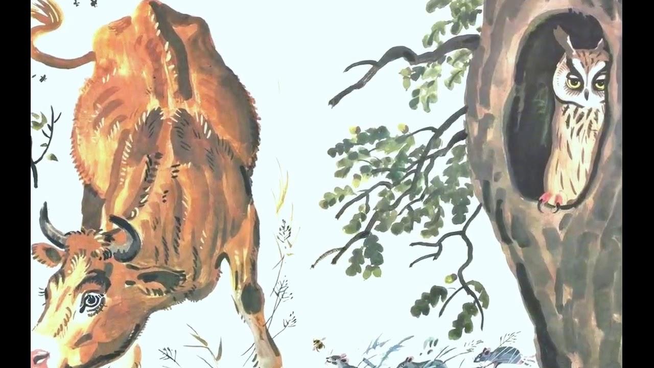 помогло бианки сова картинки старика херсонская область