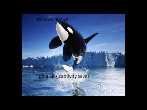 zt2:operation orca rescue:from deaths door to captive and healthy