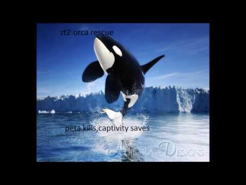 zt2:operation orca rescue. peta kills captivity saves.