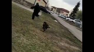 Mark Ingram Gets Completely Tossed to the Ground By a Dog