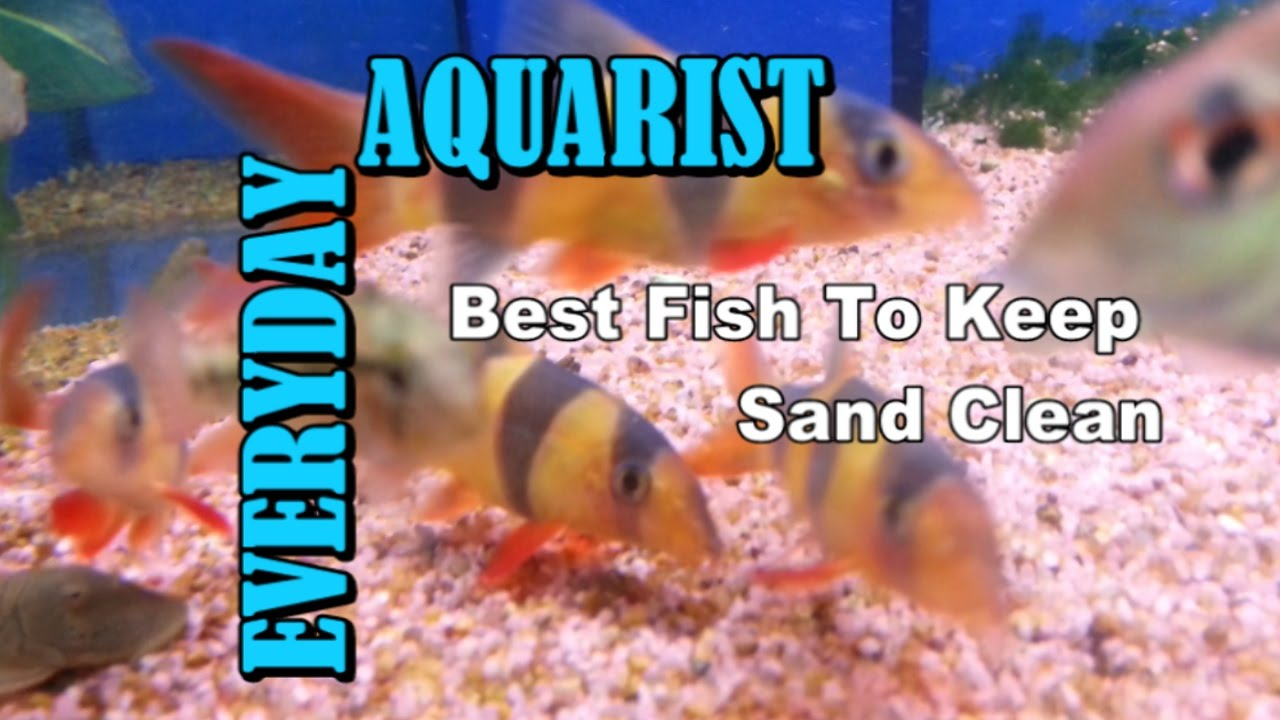 Best fish to keep aquarium sand gravel clean youtube for How to clean a fish tank