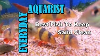 Best Fish To Keep Aquarium Sand & Gravel Clean