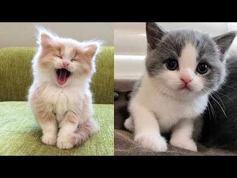 Baby _Cats and kittens Meowing compilation | Baby cat cute and funny cat video Compilation #11