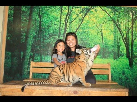 Exotic Wildlife in the Philippines