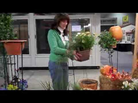 Spring or Fall topiary ideas for decorating your home with Toppitt