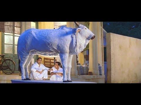 Hulchul || Comedy Cow scene ||  Akshay Khanna || Paresh Rawal  Part 4