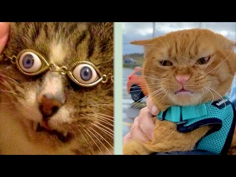 BEST CAT MEMES COMPILATION OF 2020 PART 35 (FUNNY CATS)