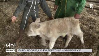 ANIMAUX : En Bourgogne l'élevage est une histoire de vie