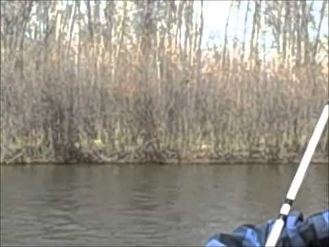 How to catch paddlefish.wmv