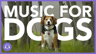 How to Relax Your Dog - The BEST Relaxation Music for Dogs! (2021!)