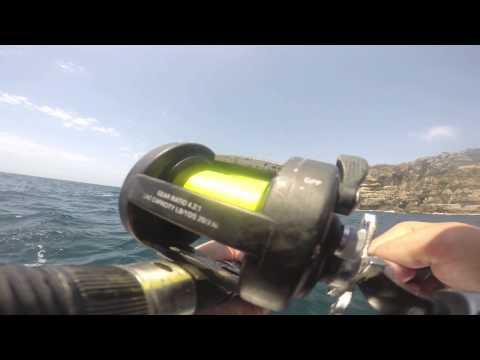 SFTV: Season 1 Episode 3 South Head Kingfish Sydney