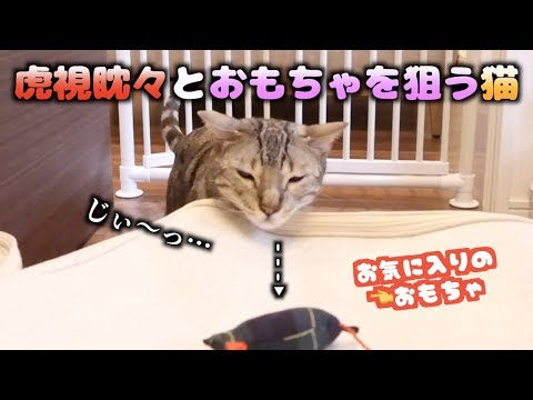 怒られながらも絶対にイタズラをやめない猫