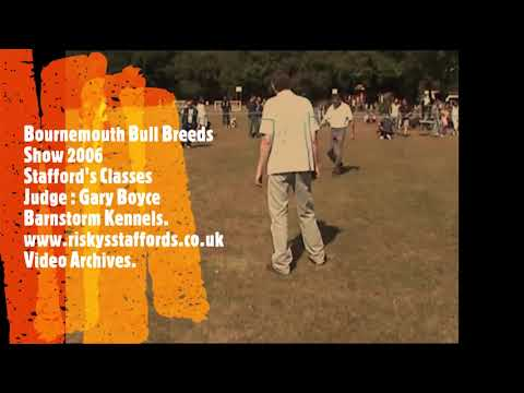 bournemouth-bull-breeds-show-2006---riskys-staffords-official-video-archives