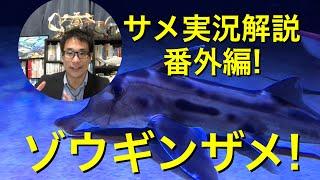 サメ解説、解剖、サメイベントなど
