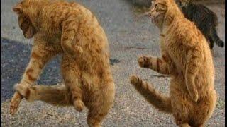 Танцы животных мира 2 ● Приколы с животными лето 2014 ● Funny Animals Compilation ● Dancing Part 2