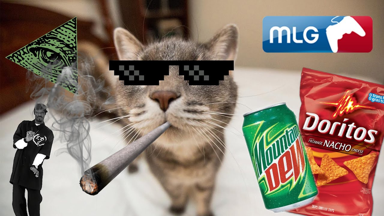 mlg cats in action   youtube