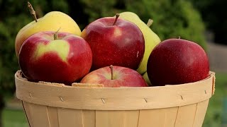 Kid-friendly Apple Dip Recipes