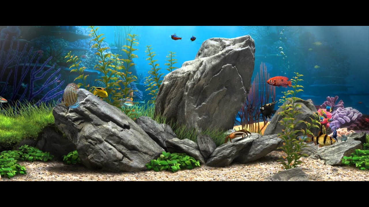 3d fish aquarium - 21:9 [live wallpaper] - (1080p) - youtube