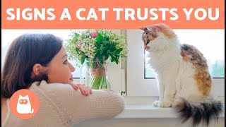 7 SIGNS that your CAT TRUST YOU