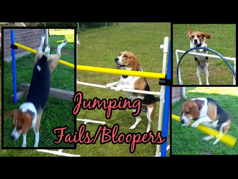 Jumping Fails! | Chubby Jumpers