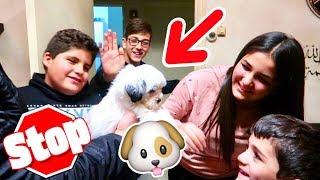شتريت كلب شرس للبيت ||| شوفوا ردة فعل ماما ||| احلى مفاجأة سمراء وخلود ||| BOUGHT A PUOOY