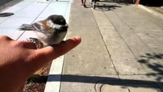 Wild bird won 39 t fly away