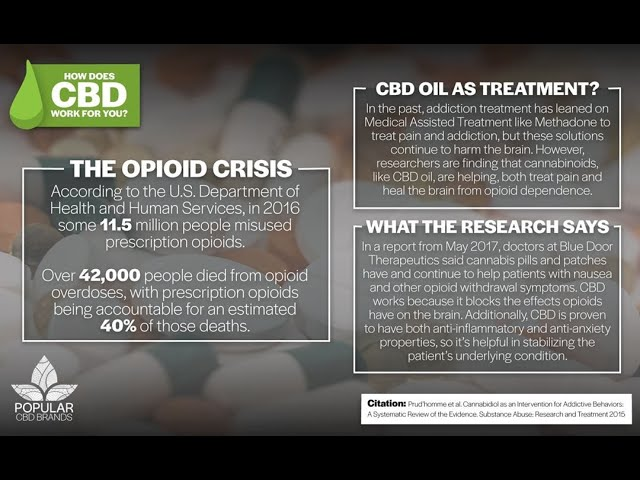 CBD Oil Benefits Explained
