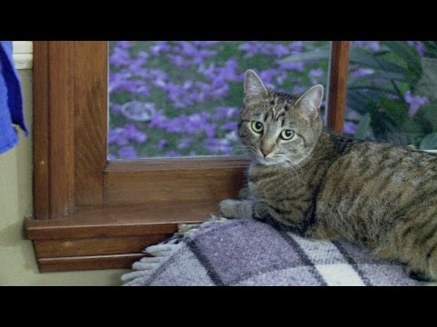 How Do You Like Meow: Khloe | My Cat From Hell