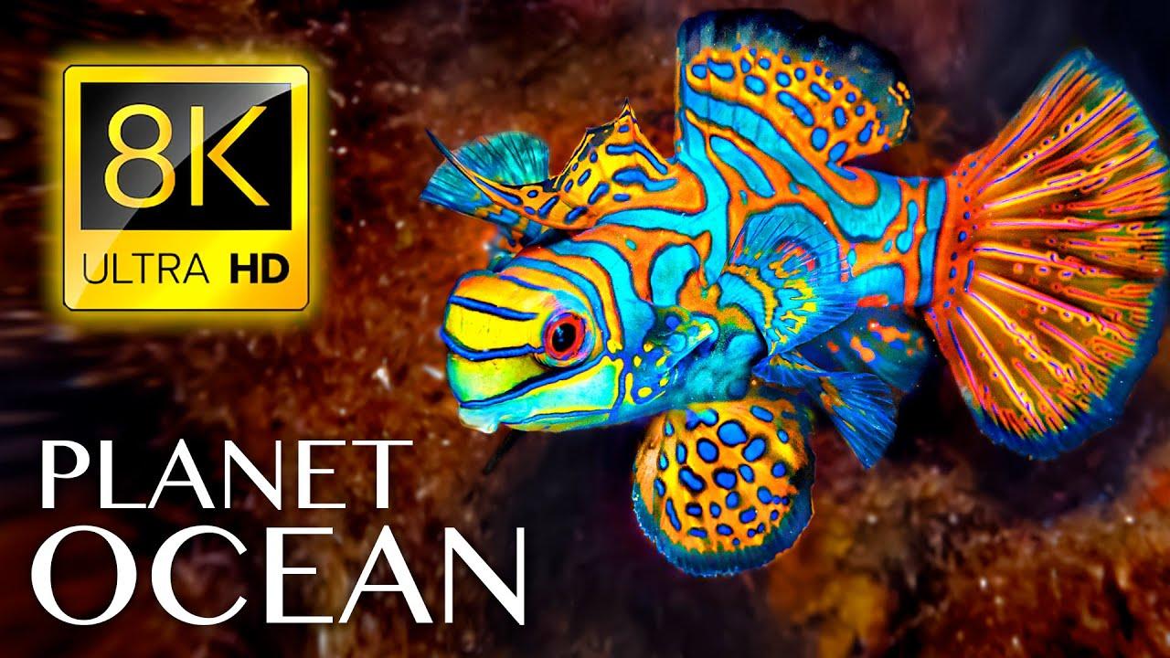 PLANET OCEAN in 8K ULTRA HD