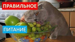 Правильное кормление кошек. Как правильно кормить кошек.