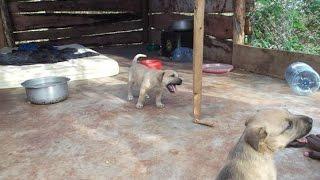 Second Vlog for Village to Village, Kilimanjaro Animal Rescue, Uchira Childrens Fund, Tanzania.....