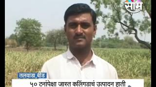 Anil Hatte's watermelon farming success story